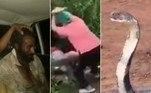 Cobra-rei com comprimento de Kombi é resgatada de poço inativo.Vovó breca intimidade entre jovens na rua com tábua de madeira.Homem é achado vivo em cemitério 4 meses após ser declarado morto.A seguir, os conteúdos mais lidos doHORA 7na última semana!