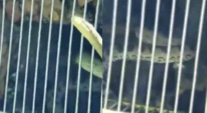 Turista fez imagens da cobra dentro da piscina da pousada em Rio Quente