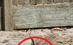 Segundo os caçadores de cobra, esses muros não são recomendados em casas por isso: eles atraem as cobras, que procuram alimento nessas fissuras e buracosNÃO PERCA:Atum raro de 200 kg é leiloado por mais de R$ 1 milhão no Japão