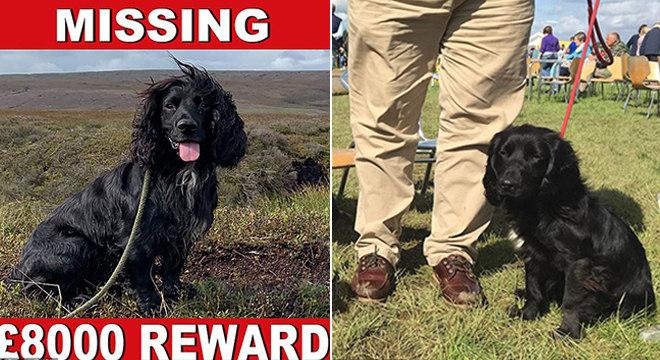 O cocker spainel Mudd está desaparecido há dois meses