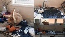 Coelha destrói plantas, entope pia e transforma cozinha em pesadelo