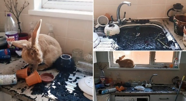 Coelhinha caótica destruiu vasos de planta, entupiu pia e devastou cozinha de moradora