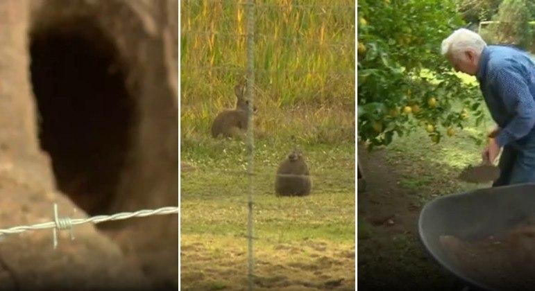 Coelhos tomaram terreno de aposentado na Austrália e geraram milhares de dólares em danos