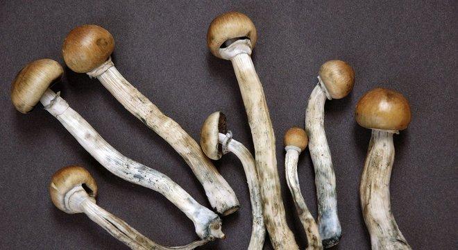 A psilocibina é um composto presente em cogumelos alucinógenos
