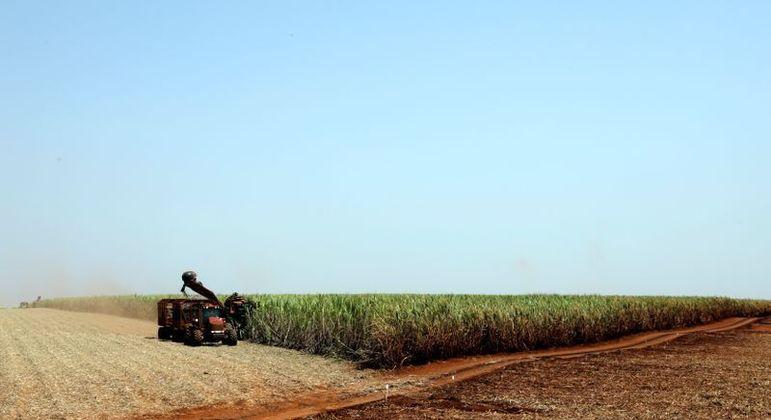 Açúcar bruto para outubro fechou em alta de 0,05 centavo de dólar, ou 0,3%