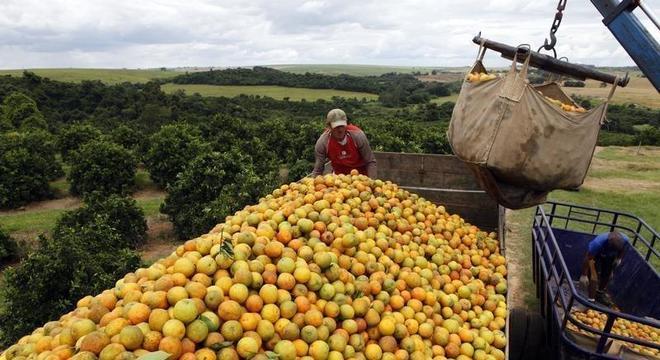 Trabalhadores carregam laranjas em fazenda no interior paulista