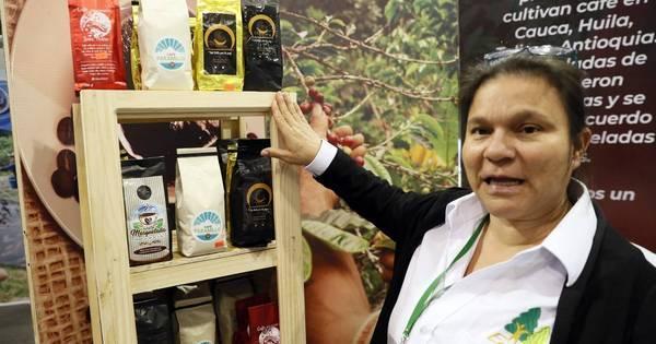 Ex-guerrilheiros das Farc semeiam café com esperança de colher paz