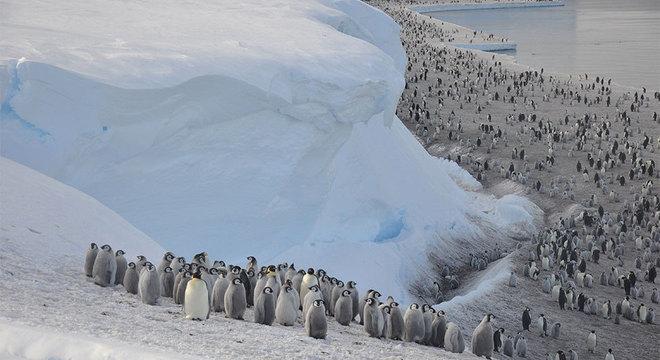 Os pinguins-imperadores precisam de uma plataforma de mar congelado estável para viver