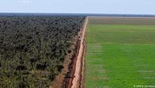 Supermercados europeus ameaçam boicotar Brasil por desmatamento