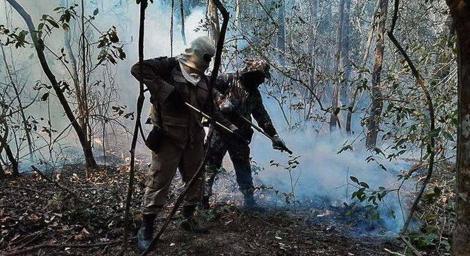 As chamas já afetaram o habitat de 85,2% das espécies de plantas e animais ameaçadas