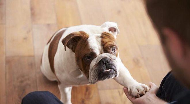 Como adestrar cachorro em casa? Dicas e truques para ensinar aos pets
