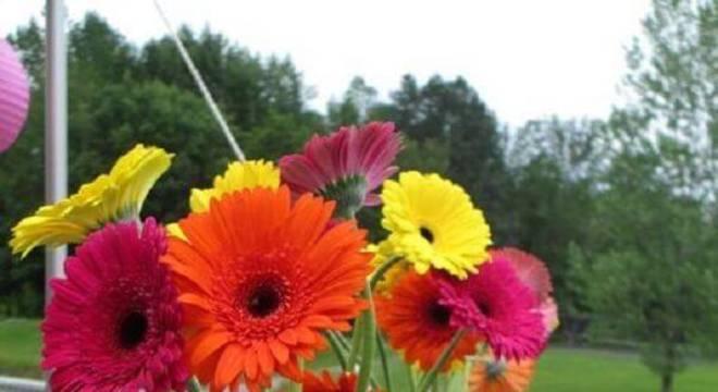 Composição colorida formada com flores de gérbera