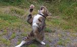 'Gato dramático', de Iain Mcconnell