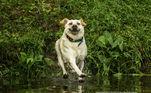 Olha, mãe, eu consigo andar na água ', de John Carelli