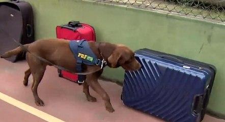 Cães farejadores marcam início da operação
