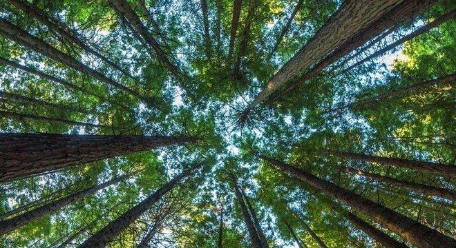 Árvores ajudam a resfriar o clima local, e, sem elas, as temperaturas logo começariam a subir