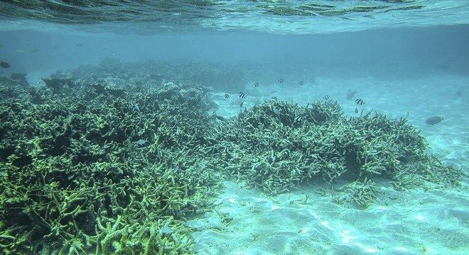 A atual acidificação dos oceanos acontece por ação humana, diz o IPCC