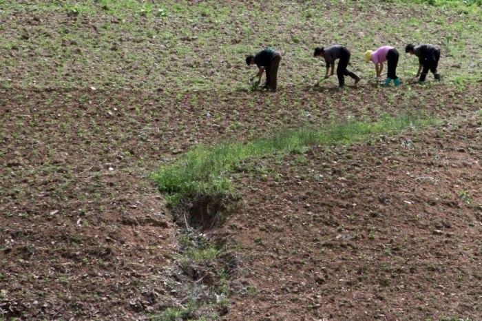 Cruz Vermelha alerta sobre risco de crise alimentar na Coreia do Norte