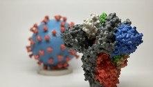 Uma única mutação faz coronavírus oito vezes mais infeccioso