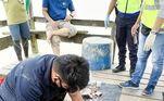 Os habitantes abriram o estômago do réptil e encontraram as roupas de Ricky, além de restos humanosVALE SEU CLIQUE:Mãe é criticada por levar filha bebê à caça para 'normalizar a morte'