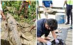 Um garoto de 14 anos foi encontrado morto dentro do estômago de um crocodilo, depois de ter sido arrastado para debaixo d'água pelo animal