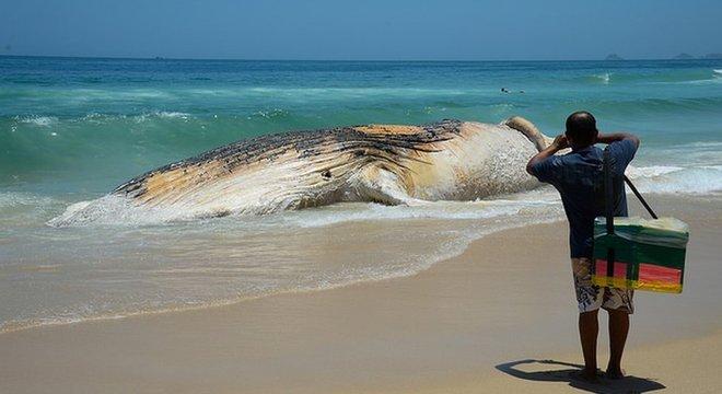 Temer deve citar a criação da 'maior área de proteção marinha da história brasileira'