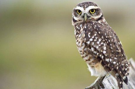 O Brasil tem 16% das aves de todo o planeta; 91% das aves do mundo passa ao menos parte da vida nos trópicos