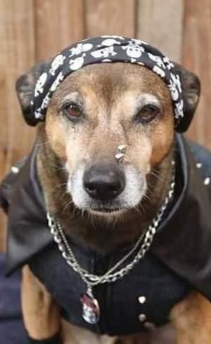 Costelinha foi o primeiro cão a ser resgatado, antes mesmo do Instituto ser criado