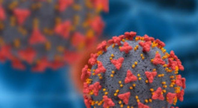 O coronavírus tem em seu entorno espículas que aderem às células humanas