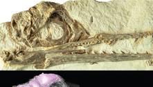 Cérebro adaptado ajudou aves pré-históricas a sobreviver à extinção