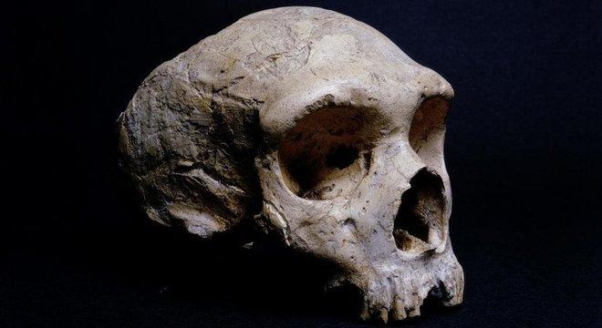 O crânio fossilizado de um neandertal encontrado em Gibraltar é exibido no Museu de História Natural de Londres