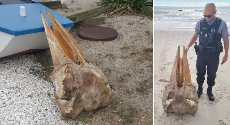 Crânio gigantesco e misterioso foi encontrado em praia de Nova Jersey, nos EUA