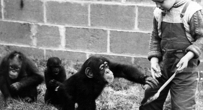 Humanos imitam de uma maneira que os chimpanzés não - psicolólogos chamam isso de superimitação