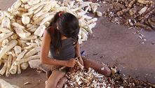 A cada dois dias, trabalho infantil provoca 5 acidentes graves em SP