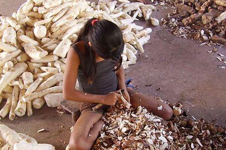 Corte de cana é uma das piores formas de trabalho infantil