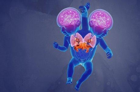 As crianças têm cérebros, pulmões e corações próprios