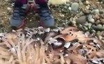 Eles são crustáceos que geralmente vivem em colônias gigantes como essaCLIQUE AQUI PARA ACESSAR O CONTEÚDO NA ÍNTEGRA!
