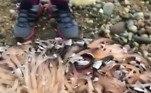 Testemunhas logo viram milhares de criaturas estranhas presas com tentáculos ao pedaço de madeira