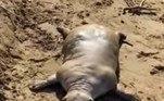 Uma criatura muito estranha e assustadora deixou banhistas com medo, na Grécia
