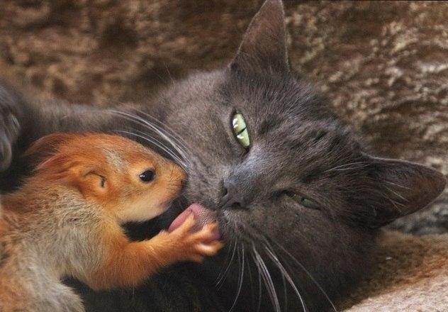 Nesta foto, vemos a gata dando banho no seu novo filhoteVeja também:Cadela adota macaquinho abandonado na Índia