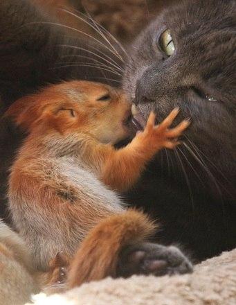 Pusha cuida dopequeno esquilo como se fosse um verdadeiro filhote de gato