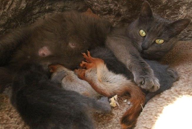 A felina, chamada Pusha, está inclusive alimentando o roedorLeia mais:Leoa de luto surpreende e adota antílope indefeso como filhote
