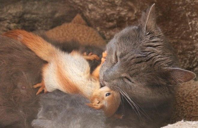 Uma gata adotou um filhote de esquilo no parque de miniaturas deBakhchisaray, na Crimeia, segundo informações divulgadas pela agência de notícias Reuters, nesta quinta-feira (25)*Estagiária do R7 sob supervisão de Ana Luísa Vieira