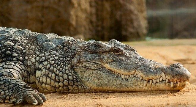 Crocodilo que matou cientista tem aproximadamente 5 m de comprimento