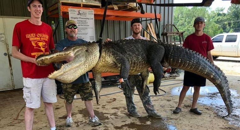 Crocodilo de quase 4 metros carregava dentro de si um artefato de mais de 7 mil anos