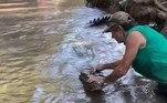 'O crocodilo-de-água-salgada é o mais agressivo do mundo, responsável por muitas mortes', pontuouNão vá embora!Píton esganada sobrevive após ter cobertor removido pela boca