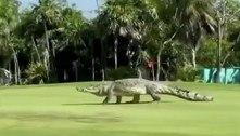 Crocodilo gigantesco invade campo de golfe e assusta: 'Estamos presos'