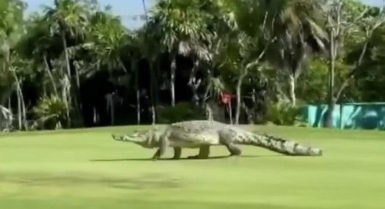 Animal passeou tranquilamente e não se importou em atrasar o jogo