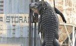 Segundo o The Sun, o animal media 4,5 m e 363 kg