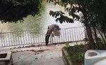 A população tem feito apelos constantes às autoridades para que medidas sejam tomadas o quanto antesAinda no México, um sem-teto foi abocanhado e levado ao fundo de uma laguna por um crocodilo. Veja a seguir!